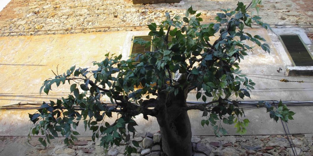 Markandeya - Lajatico gianni lucchesi